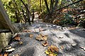 137 stairs steps down to bridge floor deck from visitor center natural bridge state park (29953176604).jpg