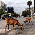 140310 goats cabras.JPG