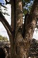 15-07-14-Edzna-Campeche-Mexico-RalfR-WMA 0611.jpg