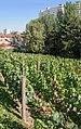 15e Parc Georges Brassens vigne.jpg