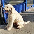 1 dog - 20150310 - 1.jpg