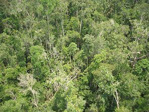 Peat swamp forest - Peat swamp forest in Kalimantan