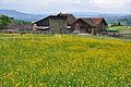 2010-05-14 15-20-51 Switzerland Zurich Wildensbuch.jpg