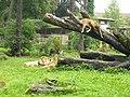 2011-07-05 Zoo Rostock 03.jpg