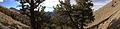 2014-10-13 16 16 02 Panorama of Limber Pines southeast of Kingston Summit, Nevada.JPG