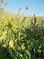 2015.08.17 17.57.07 DSCN2848 - Flickr - andrey zharkikh.jpg