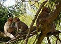 2016-04-21 14-04-15 montagne-des-singes.jpg