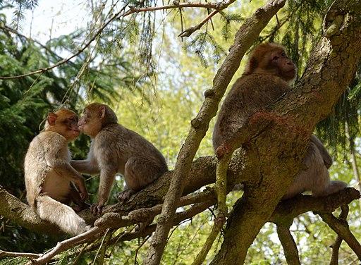 2016-04-21 14-04-15 montagne-des-singes