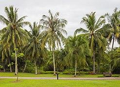 2016 Singapur, Ogrody botaniczne (010).jpg