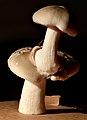 2017-09-29 20-02-12 champignon-39f.jpg