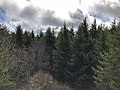 2019-10-27 11 57 07 View south-southeast across a Red Spruce forest from the observation tower on Spruce Knob in Pendleton County, West Virginia.jpg