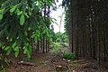 2019.05.25. Поход в лес Обербуш Ратинген. Чтец-11.jpg
