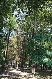 26-106-5001 парк Трельовського.jpg