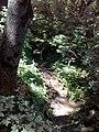 35-211-5004 Казавчинські скелі Лютинська 177.jpg