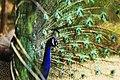 4کیش-باغ پرندگان.jpg