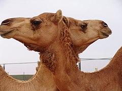 47890031 - Flickr - Hamdan Mesfer Al Amimi.jpg