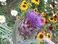 5flower02.jpg