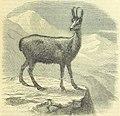 925 of 'Beeton's Historical Romances, Daring Deeds, and Animal Stories. Illustrated, etc' (11093674955).jpg