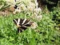 A Butterfy II (3824907489).jpg