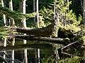 Abandoned Beaver Pond (888fa0b8155d463c9c9674d1c8b739c6).JPG