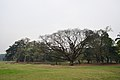 Acharya Jagadish Chandra Bose Indian Botanic Garden - Howrah 2011-02-20 1660.JPG