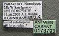 Acromyrmex crassispinus casent0173793 label 1.jpg