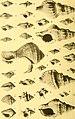 Actes de la Société linnéenne de Bordeaux (1923) (16584858088).jpg
