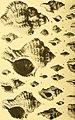 Actes de la Société linnéenne de Bordeaux (1923) (16771269961).jpg