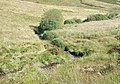 Afon Doethie Fawr, near Tyncornel Hostel, Ceredigion - geograph.org.uk - 566020.jpg