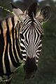 Africa Safari 003 (5253769299).jpg