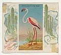 African Flamingo, from Birds of the Tropics series (N38) for Allen & Ginter Cigarettes MET DP839011.jpg
