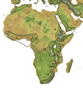 Afromontane Subregion of the Afrotropical realm