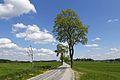 Ahornallee zwischen Altweitra und Hörmanns 2016-05 NÖ-Naturdenkmal GD-0082.jpg