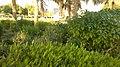 Alain al jaheli park ,United Arab Emirates - panoramio (56).jpg