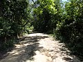 Alameda Cândido Brasil Moro - Palma - Santa Maria, foto 09 (sentido S-N).jpg - panoramio.jpg