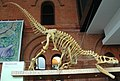 Allosaurus atrox theropod dinosaur (Morrison Formation, Upper Jurassic; Cleveland-Lloyd Quarry, northern Emery County, east-central Utah, USA) 1 (15375587115).jpg