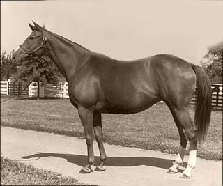 Almahmoud American-bred Thoroughbred racehorse