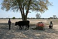 Along the road to Rundu - panoramio.jpg