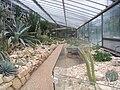 Alter Botanischer Garten Hamburg GewächshausKakteengewächse (3a).JPG