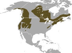American Water Shrew area.png