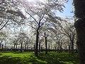 Amstelveen, Netherlands - panoramio (17).jpg