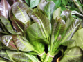 Anacardium occidentale (Leaves).png