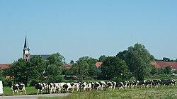 Ancerviller - Sortie des vaches.jpg