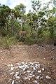 Ancient Aboriginal dinner site - panoramio.jpg
