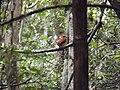 Andasibe-Mantadia National Park 2013 27.jpg