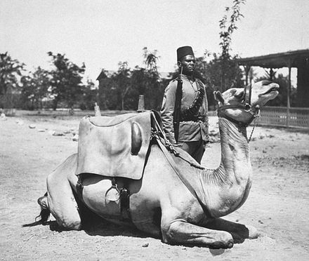 A camel soldier of the native forces of the British army, early 20th century. Anglo-Egyptian Sudan camel soldier of the British army.jpg