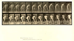 Animal locomotion. Plate 390 (Boston Public Library).jpg