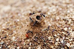 Ant mound hole - preventing water coming into nest during rain