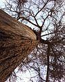 Antique tree.jpg
