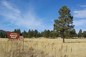 Apache-Sitgreaves National Forest - Apache National Forest